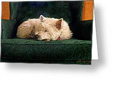 Westie Nap Greeting Card