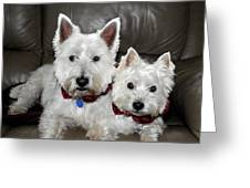 Westie World Greeting Card