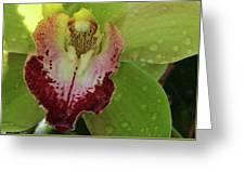 Wet Bloom Greeting Card