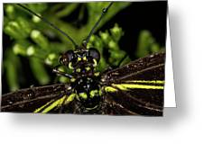 Wet Butterfly Greeting Card