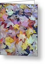 Wet Fall Leaves Greeting Card