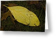 Wet Fallen Leaf Greeting Card