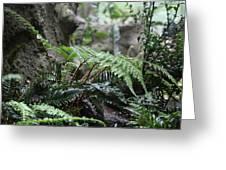 Wet Ferns Greeting Card