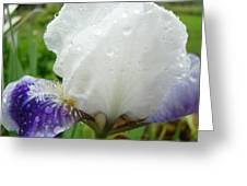 Wet Flower Raindrops Art Iris Flower Spring Baslee Troutman Greeting Card
