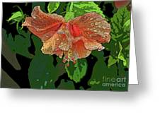 Wet Hibiscus Greeting Card
