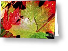 Wet Leaves Of Fall Greeting Card