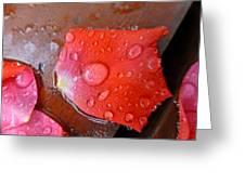 Wet Petal 1 Greeting Card