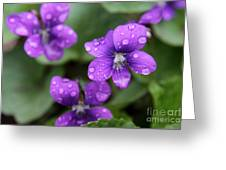 Wet Purple Violets Greeting Card by Chris Hill