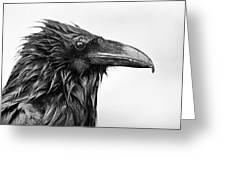 Wet Raven Greeting Card