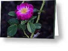 Wet Rose 2 Greeting Card