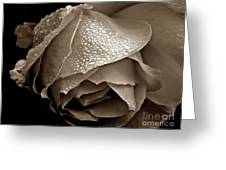 Wet Rose In Sepia Greeting Card