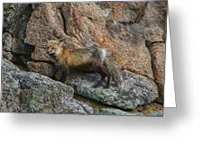 Wet Vixen On The Rocks Greeting Card