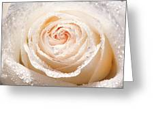Wet White Rose Greeting Card