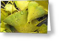 Wet Yellow Leaves 2 Wc  Greeting Card