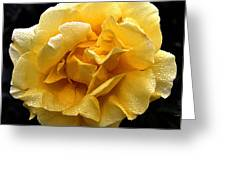 Wet Yellow Rose II Greeting Card