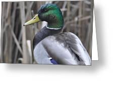 Wethead Drake Greeting Card