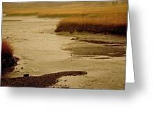 Wetland Stream Greeting Card