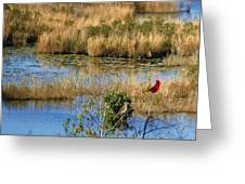 Wetlands Greeting Card