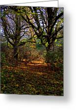 Wetlands In The Fall Greeting Card