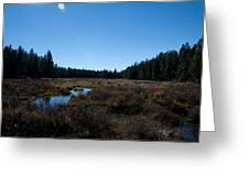 Wetlands In The Woods Greeting Card