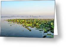 Wetlands Morning Mist  Greeting Card