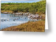 Wetlands Watering Hole Greeting Card