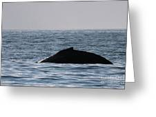 Whale Fin Greeting Card