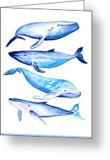 Whale Friends Greeting Card