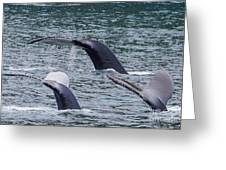 Whale Of Tales Greeting Card