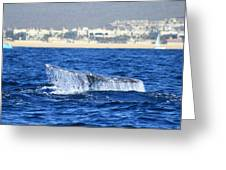 Whale Tail In Cabo Greeting Card
