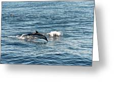 Whale Watching And Dolphins 1 Greeting Card