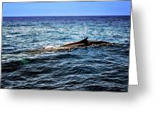 Whale Watching Balenottera Comune 4 Greeting Card