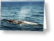 Whale Watching Balenottera Comune 5 Greeting Card