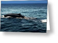 Whale Watching Balenottera Comune 6 Greeting Card