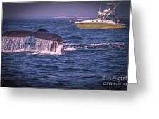 Whale Watching - Humpback Whale 3 Greeting Card