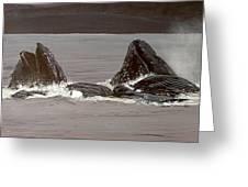 Whales Feeding Greeting Card