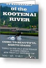 Whales Of The Kootenai River Greeting Card