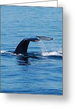 Whales Tale Greeting Card