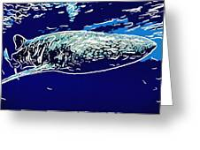 Whaleshark  Greeting Card
