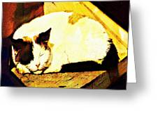 What Do Cats Dream Of Greeting Card