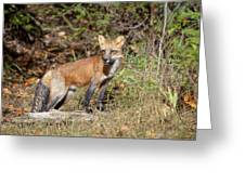 What Does The Fox Say Greeting Card