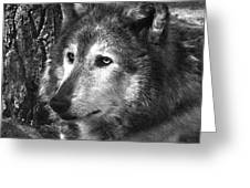 What Is A Wolf Thinking Greeting Card