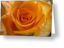 What Is In A Rose? Greeting Card