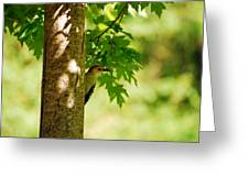 Whats A Woodpecker To Do Greeting Card