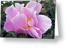 What's In A Name - Bowl Of Beauty Peony Greeting Card