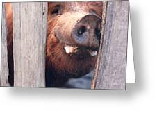 Whats New On Your Side Of The Fence Greeting Card