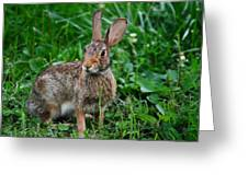 Whats Up Doc Greeting Card