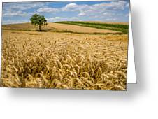 Wheat And A Tree Greeting Card