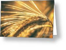 Wheat Ear Greeting Card