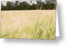Wheat Field Closeup Greeting Card